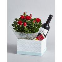 Red Wine, Rose Plant & Swiss Chocolates Hamper