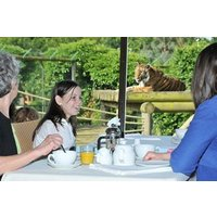 Tea with the Tigers