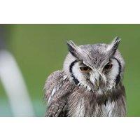 Birds of Prey Experience in the West Midlands
