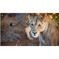 Mozambique, Kruger & Swazi Discoverer