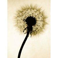 Jenny Kraft - Backlit Dandelion