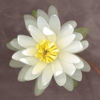 Erin Clark - Water Lily