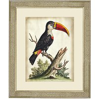 George Edwards - Toucan Framed Print, 60 x 50cm