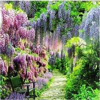 Woodmansterne Wisteria Walk Greeting Card