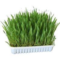 Nibble Grass - 100g