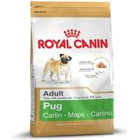 Royal Canin Pug Adult - 1.5kg