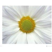 Flower Daisy - Mini Poster - 40 x 50cm