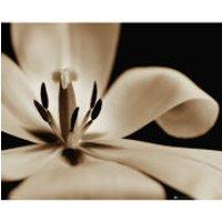 Flowers Tulip - Mini Poster - 40 x 50cm