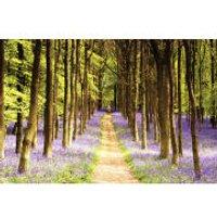 Woodland Path - Maxi Poster - 61 x 91.5cm