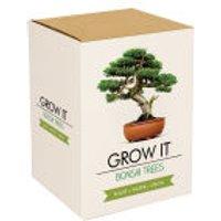 Grow Your Own Bonsai Trees Gift Box