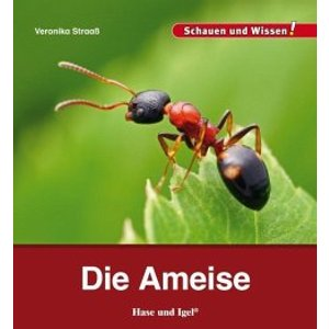 ameisen im radio-today - Shop