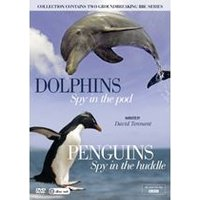 The Spy Collection - Penguins and Dolphins