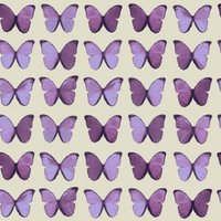 albany wallpapers papillon , 622005
