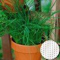 Saatscheiben Schnittlauch Twiggy 10 Zentimeter Durchmesser