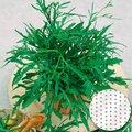 Saatscheiben Salatrucola Speedy, 10 Zentimeter Durchmesser