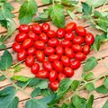 Tomatensamen Gärtner Pötschkes Mini Cherry F1