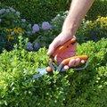 Garten Primus Buchsbaumschere , Fein- und Formschnitt