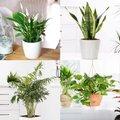 Zimmerpflanzen-Sortiment Luftreiniger