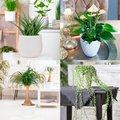 Zimmerpflanzen-Sortiment Robust & Trendig