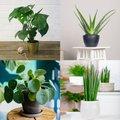 Zimmerpflanzen-Sortiment Moderne Trends