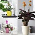 Zimmerpflanzen-Sortiment Exoten