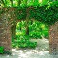 Gartenposter Efeubogen 210 x 150 Zentimeter