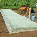 Bio Wachstumsvlies planto pro, 12 m² (8x1,5 m)