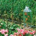 Tomatenhauben, 3 Stück, L 130 Zentimeter x Durchmesser 65 Zentimeter, transparent