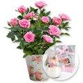 Rosafarbene Rose im Nostalgie-Topf und Windlicht mit Rosenduft
