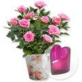 Rosafarbene Rose im Nostalgie-Topf und Herz-Windlicht