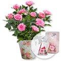Rosafarbene Rose im Nostalgie-Topf und Dreamlight Rosen-Engel