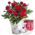 Rote Rose im romantischen Nostalgie-Topf und Glasbär mit Herz