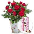 Rote Rose im romantischen Nostalgie-Topf und Herz-Pralinen-Trio