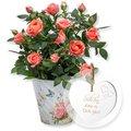 Orangefarbene Rose im Nostalgie-Topf und Vintage-Herz Schön, dass es Dich gibt!