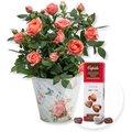 Orangefarbene Rose im Nostalgie-Topf und Pralinen-Herzen