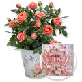 Orangefarbene Rose im Nostalgie-Topf und Wandbild Love
