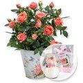 Orangefarbene Rose im Nostalgie-Topf und Windlicht mit Rosenduft