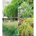 Winterhartes Gräserbeet für schattige Standorte