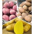 Kartoffel-Raritäten-Kollektion