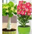 Zimmerpflanzen-Kollektion
