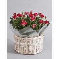 Valentine's Rose Plant Basket