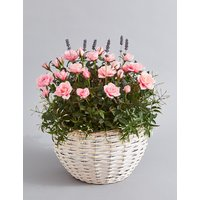 Scented Rose Basket (Pre-Order: Available from 6th March 2018)