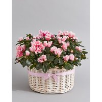Azalea Basket (Pre-Order: Available from 6th March 2018)