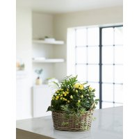 Spring Flowering Basket