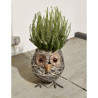 Ollie Owl Planter (Pre-Order: Available from 3rd May 2018)