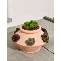 Mixed Sempervarium Planter (Pre-Order: Available from 3rd May 2018)