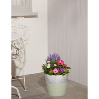 Large Summer Flowering Barrel