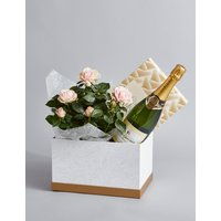Champagne, Rose Plant & Swiss Chocolate Hamper