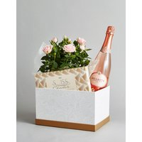 Sparkling Wine, Rose Plant & Swiss Chocolates Hamper