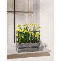 Windowbox Spring Bulb Planter